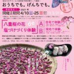 桜の塩づけ